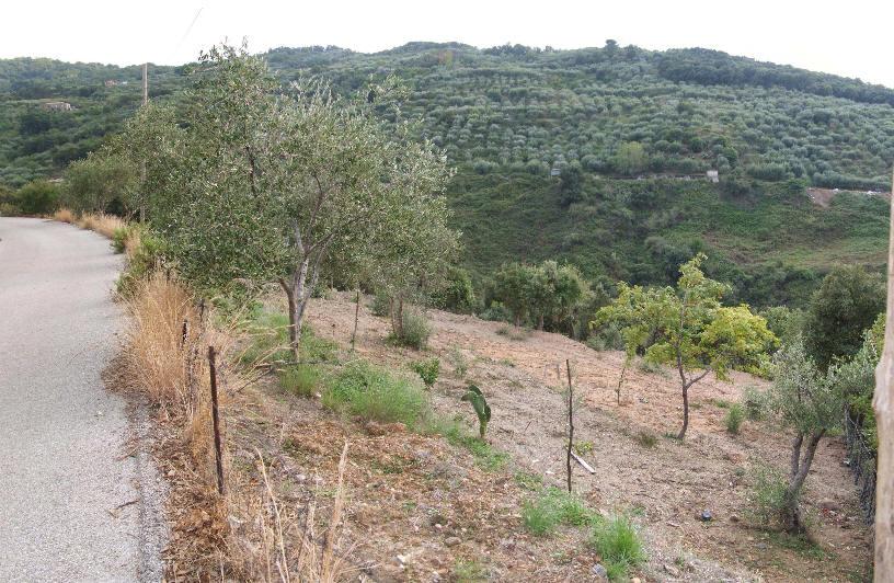 Foto del terreno in vendita nel comune di Naso - Sicilia