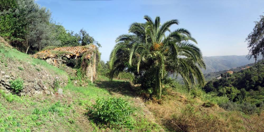 Vista complessiva del terreno con rudere in vendita a Capri Leone - Sicilia