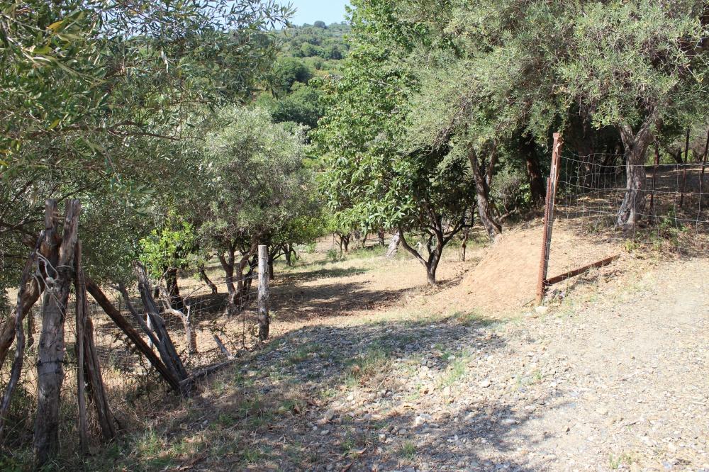 Foto 2 Terreno con fabbricato rustico nel comune di Naso - Sicilia