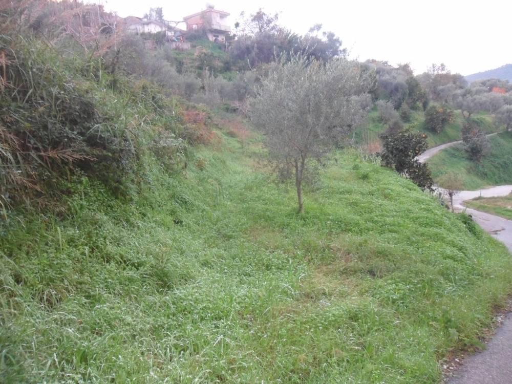 Foto 2 dell´attiguo terreno