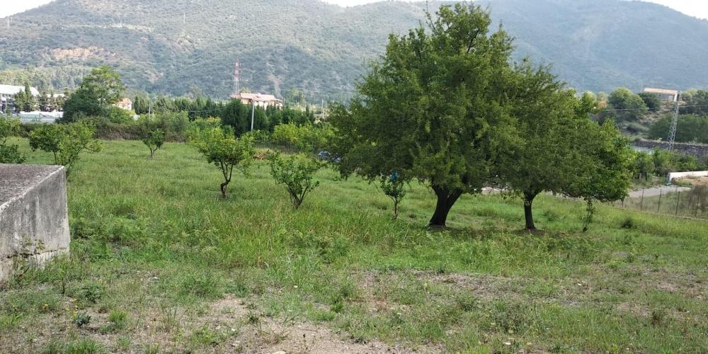 Vendesi terreno agricolo con rudere nel comune di Mirto - Sicilia